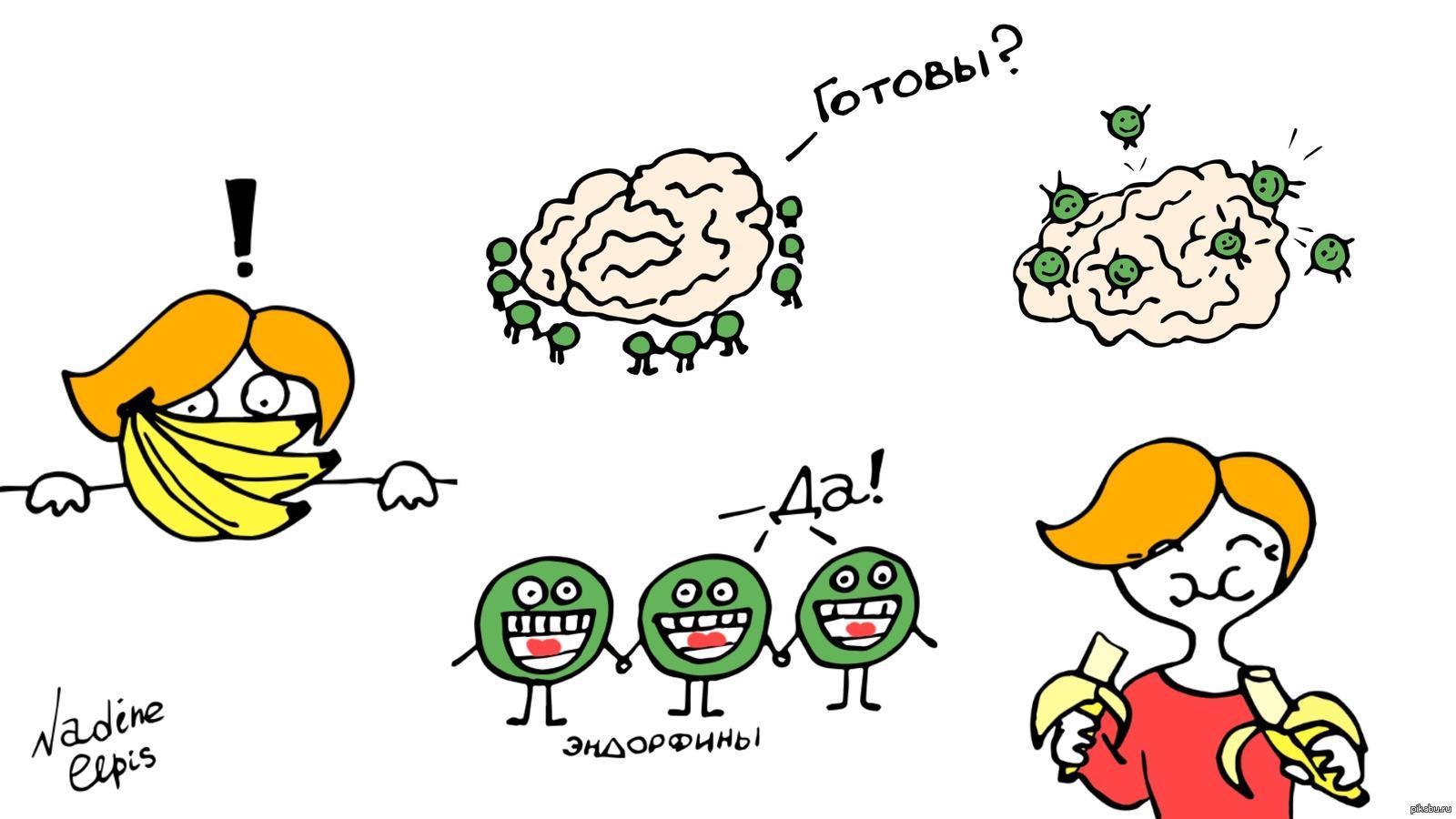 Нейрофизиология на ПостНауке: Вячеслав Дубынин об эндорфинах