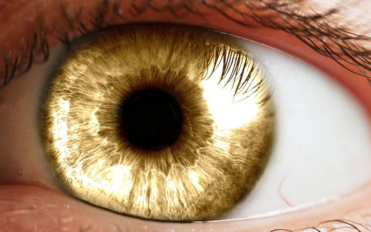 Глазной имплантат, выращенный в лаборатории, помог восстановить зрение приматам