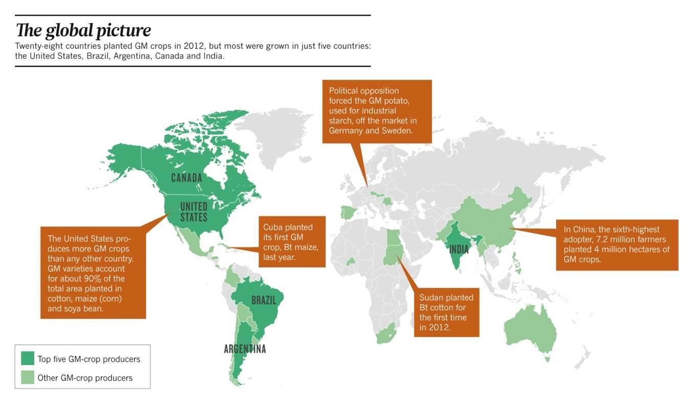война против ГМО имеет, скорее, экономические корни