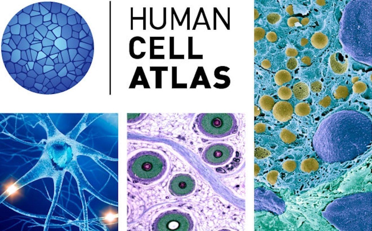 Начата работа над созданием Атласа клеток человека