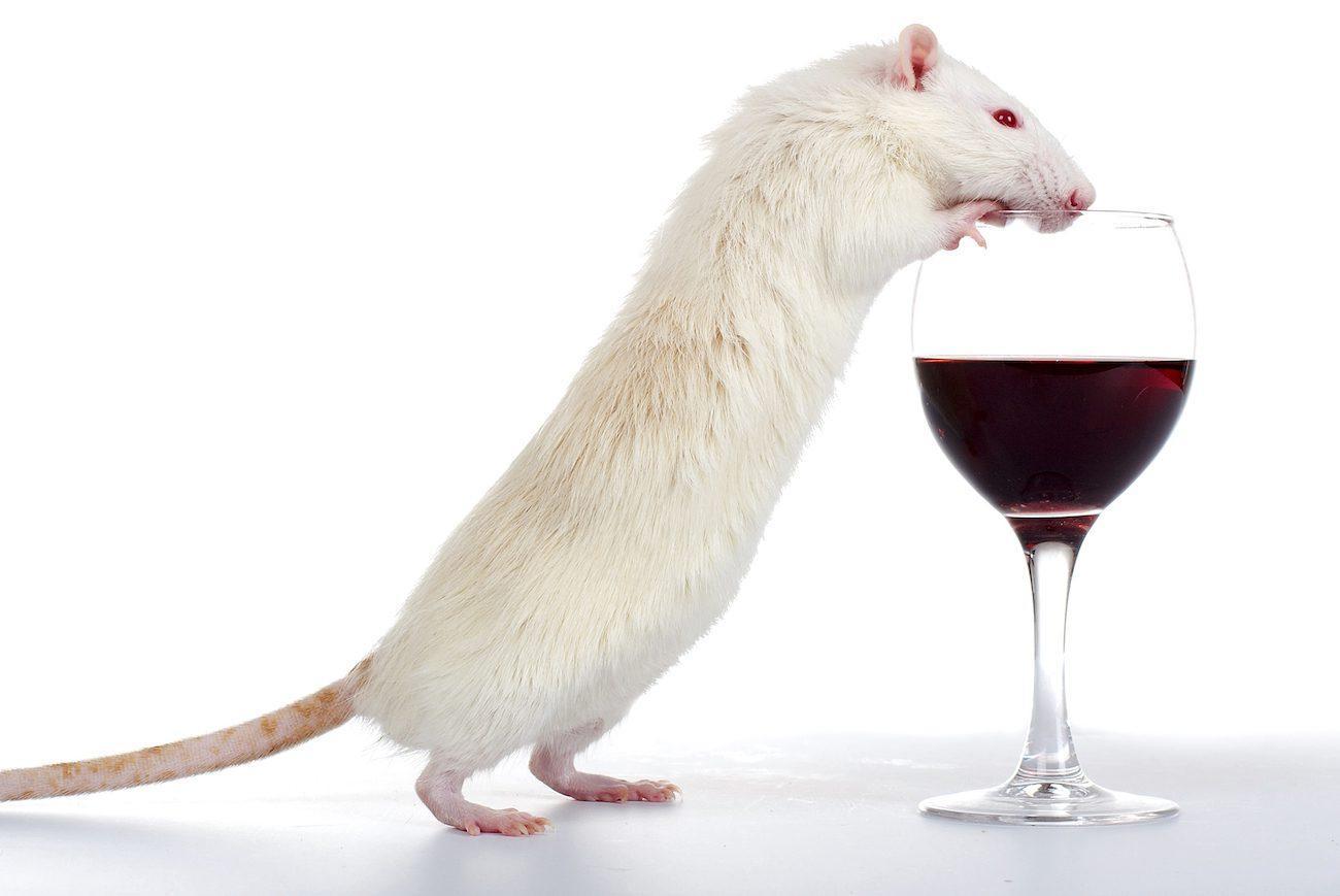 новый метод борьбы с алкогольной зависимостью