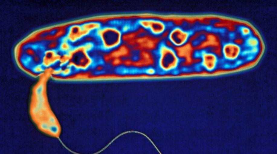 выведены бактерии для охоты на устойчивые к антибиотикам микроорганизмы