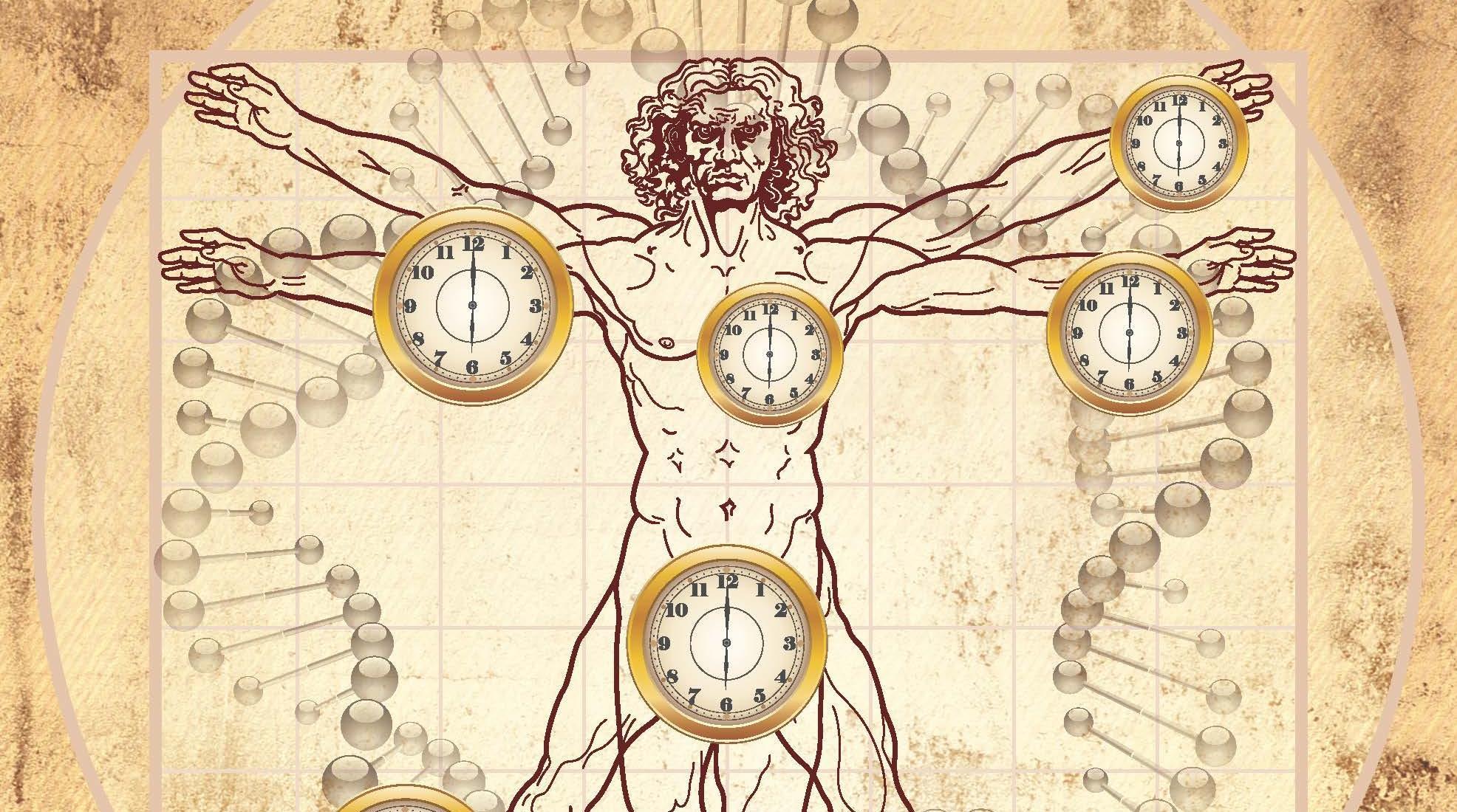 Новые биологические часы помогут остановить старение