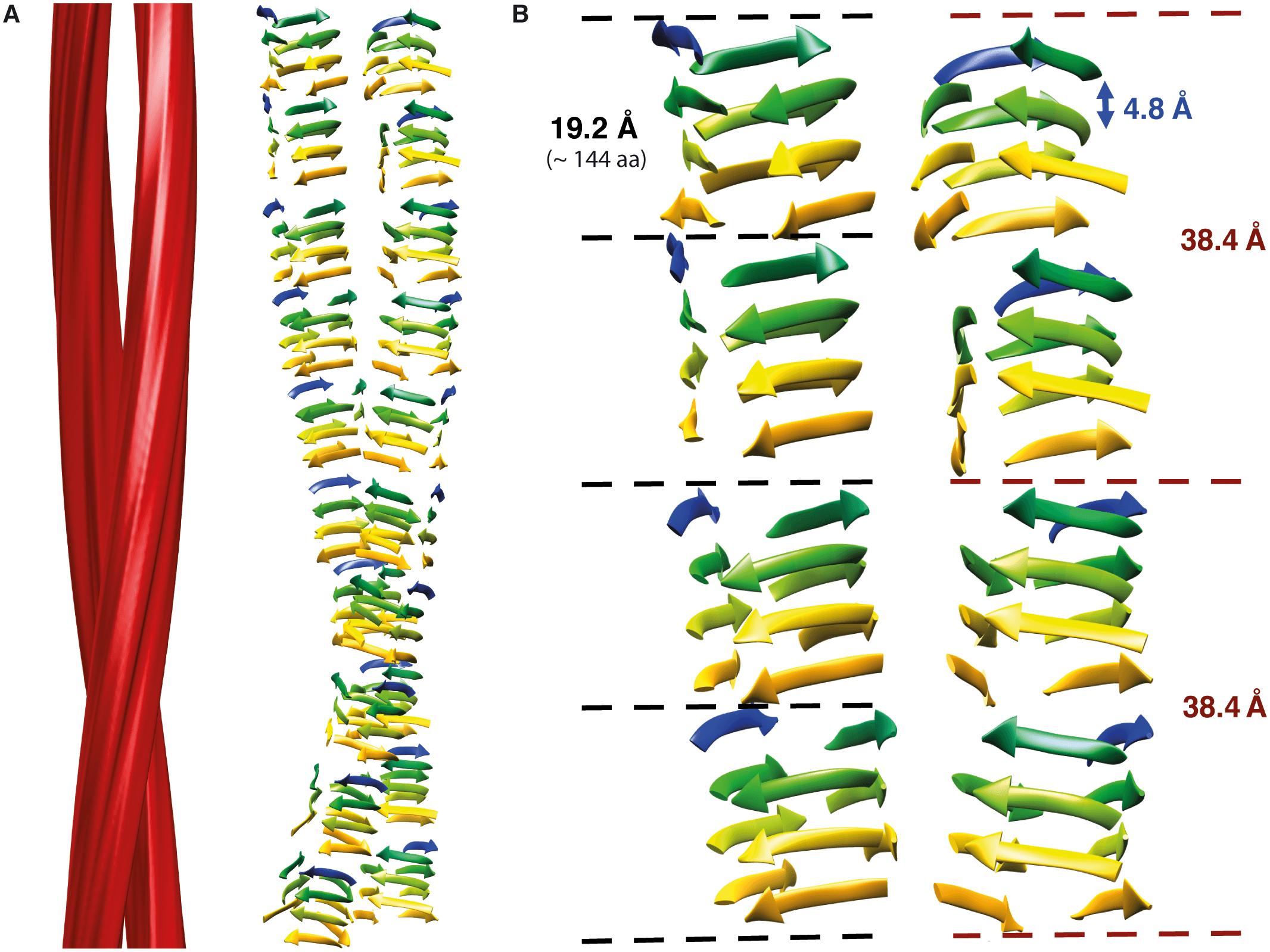 Изучена структура приона, вызывающего болезнь Крейтцфельдта — Якоба