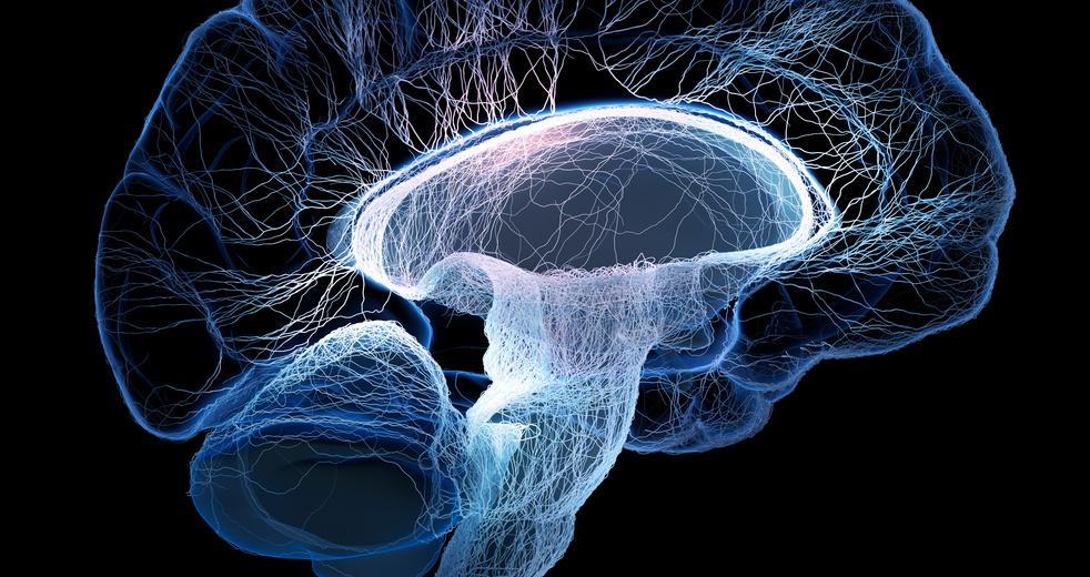 в Индии запретили эксперимент по оживлению человеческого мозга