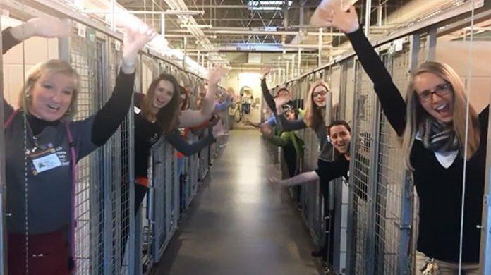 сотрудники приюта для животных празднуют свой самый счастливый день