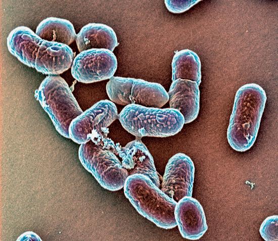 бактерии против рака