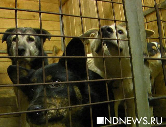 «У нас огромное перенаселение, с понедельника нам придется отдавать животных на усыпление» – горожан просят приходить за животными