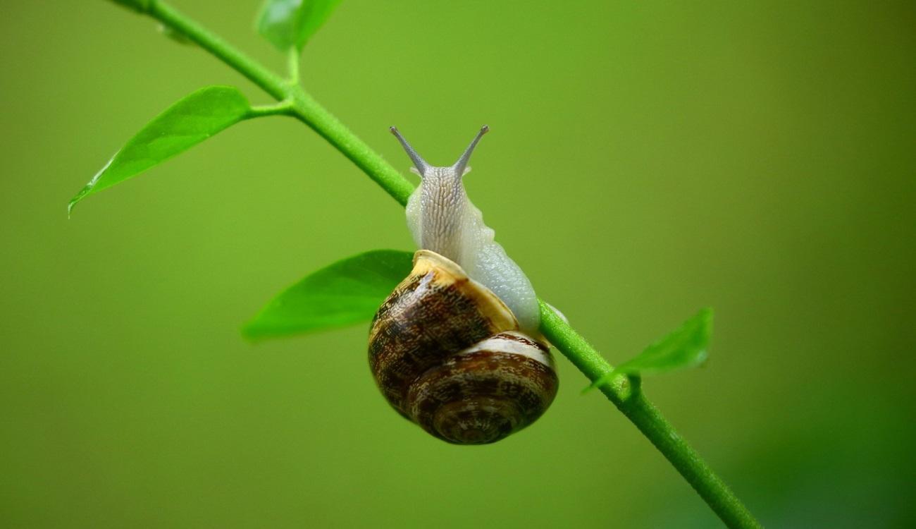 генетики выяснили, что необходимо для образования новых видов