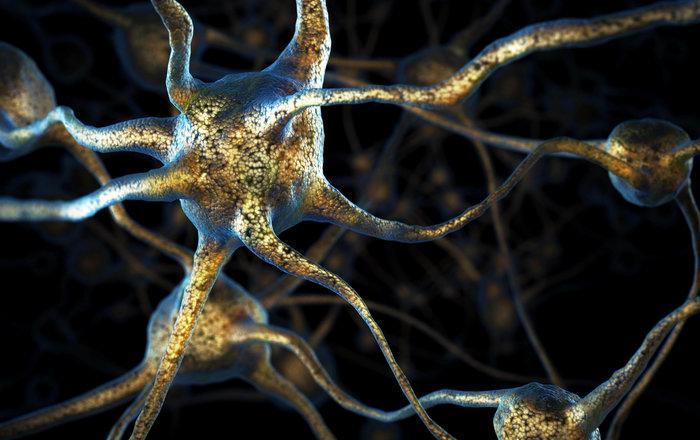 обнаружены новые механизмы образования нейронных сетей мозга