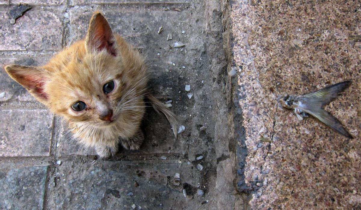 вы увидели травмированных или брошенных животных