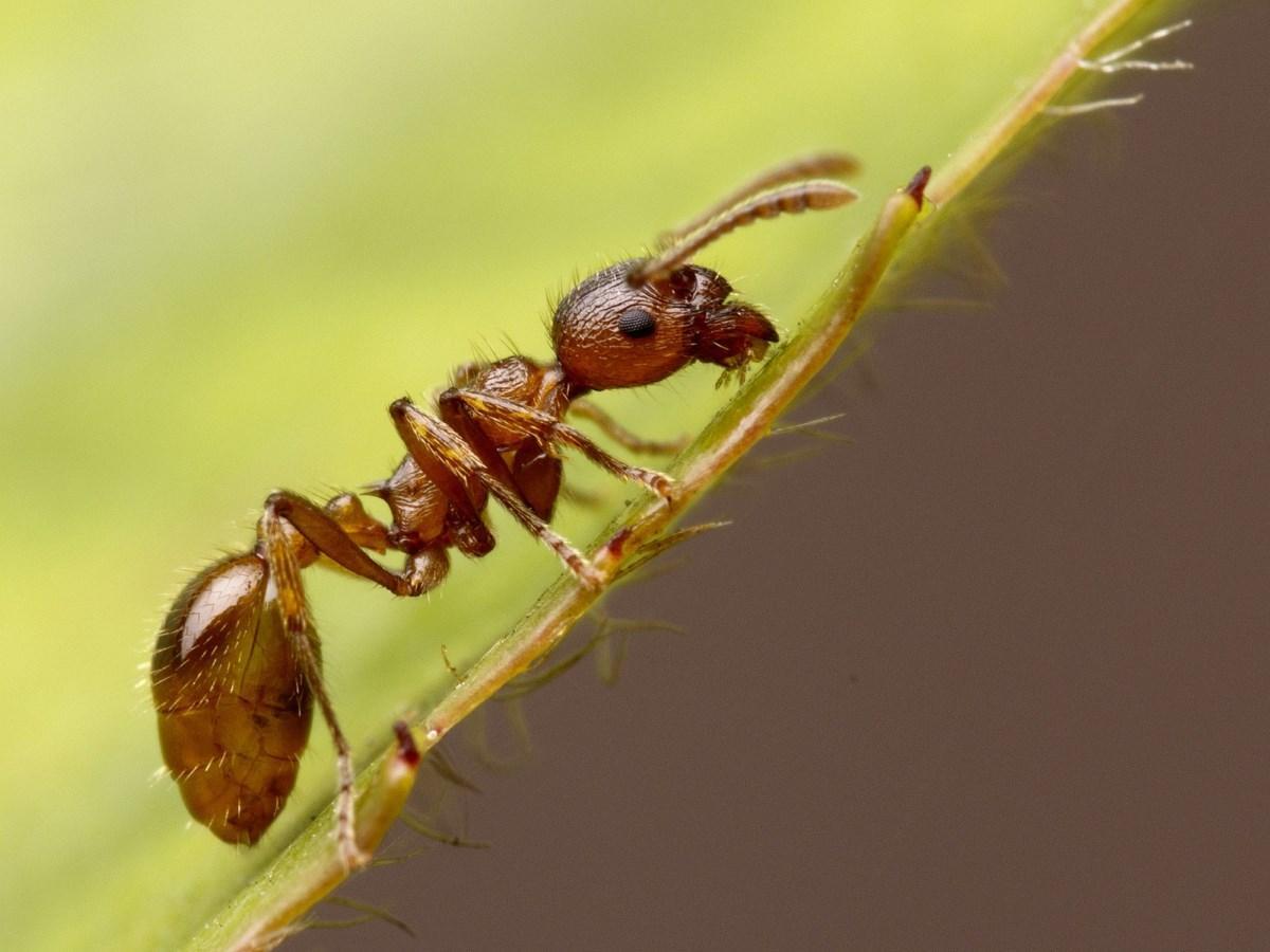 муравьи могут узнавать себя в зеркале