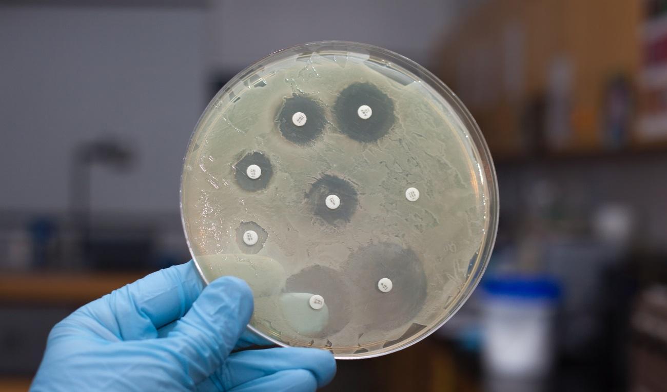 Генетики отнимут у бактерий способность развивать устойчивость к антибиотикам