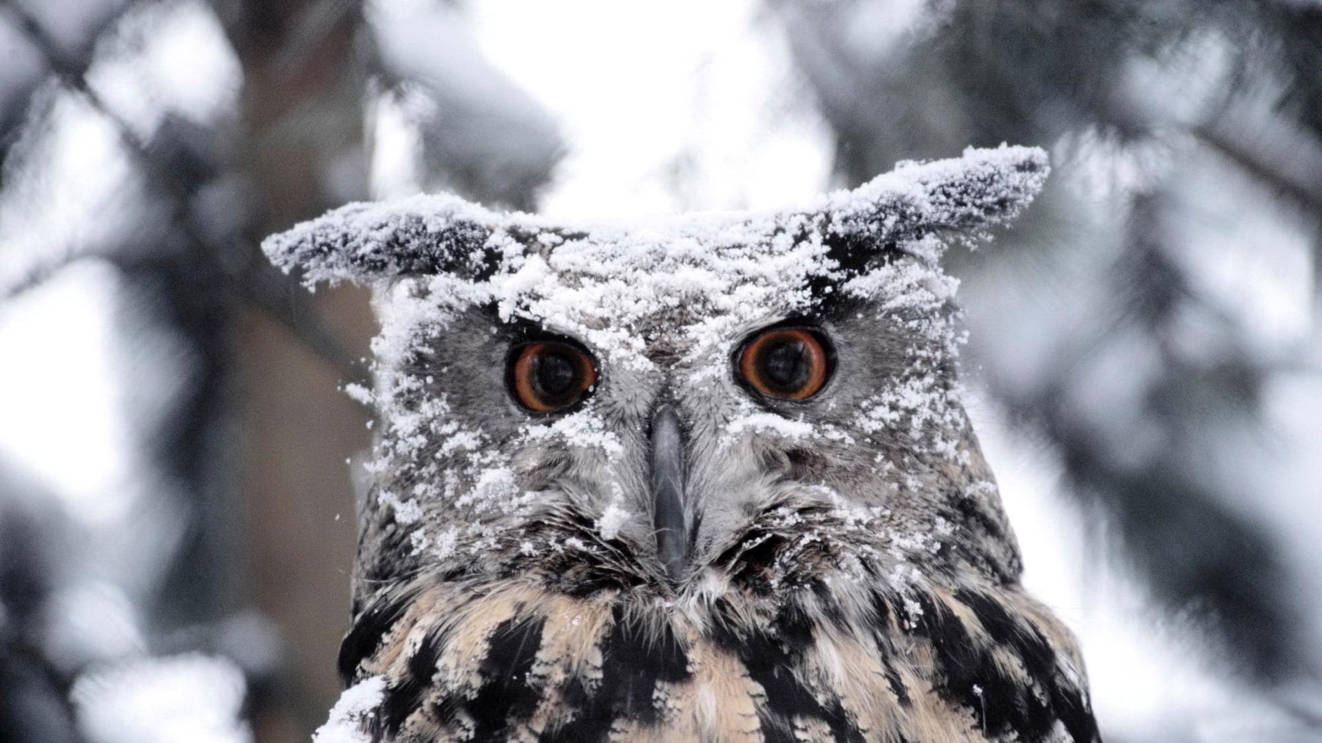 Как правильно кормить птиц зимой: 5 советов бердвотчера