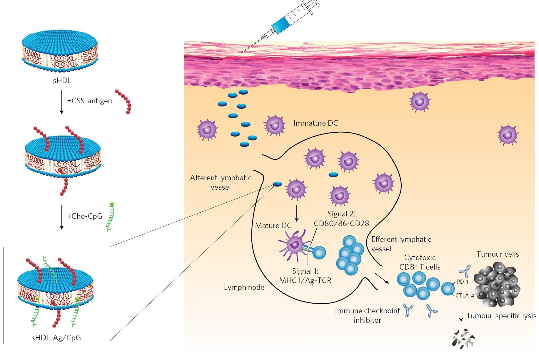 Нанодиски научили иммунную систему бороться с раком