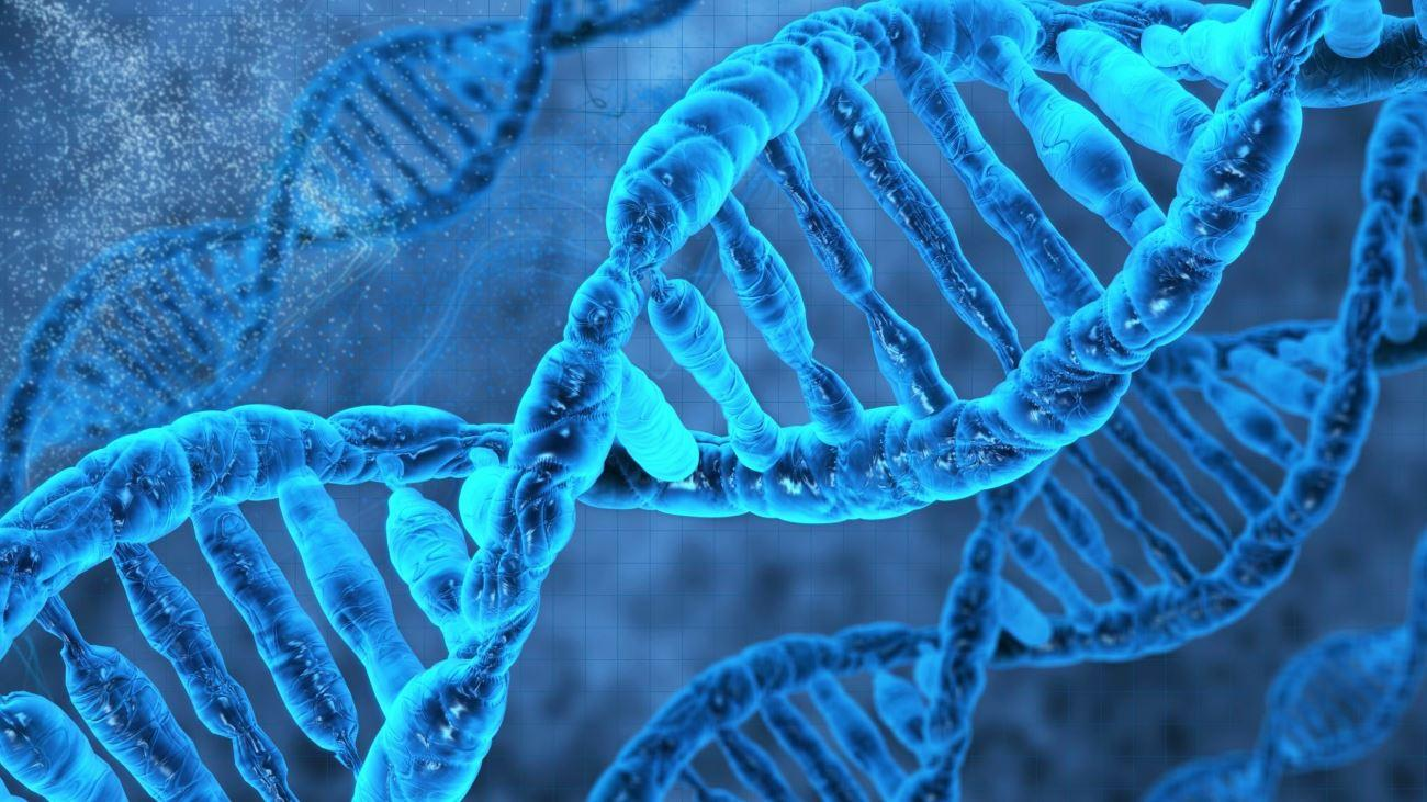 Когнитивные способности всё-таки «зашиты» в генах