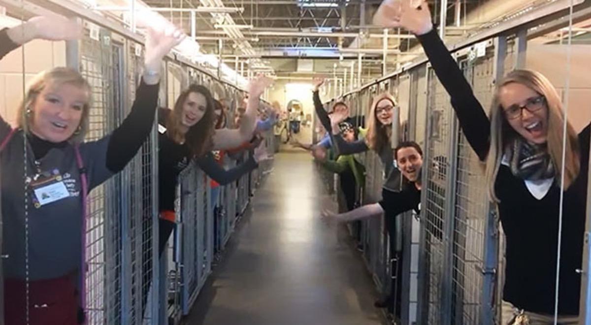 Сотрудники приюта для животных празднуют свой самый счастливый день. Все клетки пусты!
