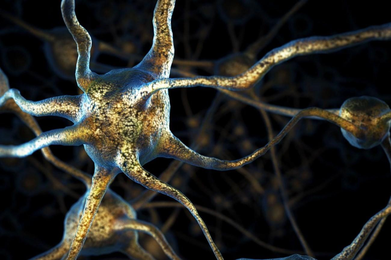 Модель нервной системы головастика подскажет, как лечить болезни опорно-двигательной системы