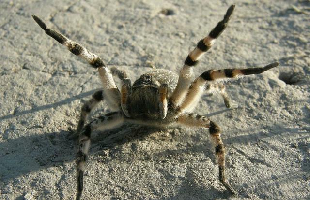 пауков