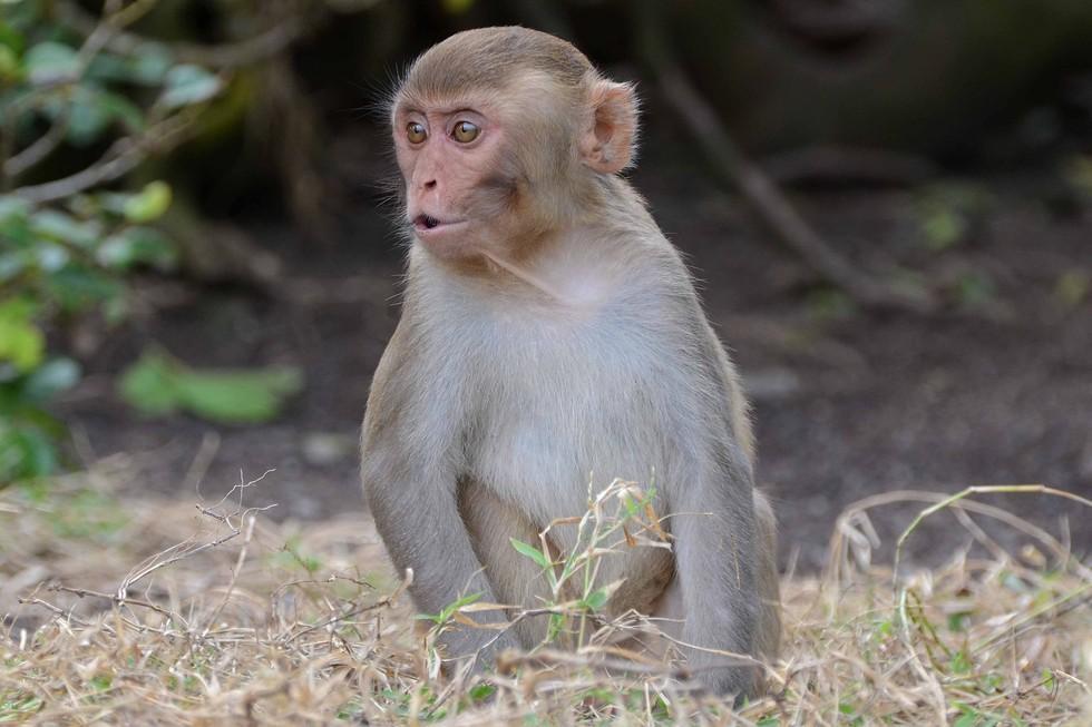 обезьяны могут разговаривать как люди, но почему они этого не делают