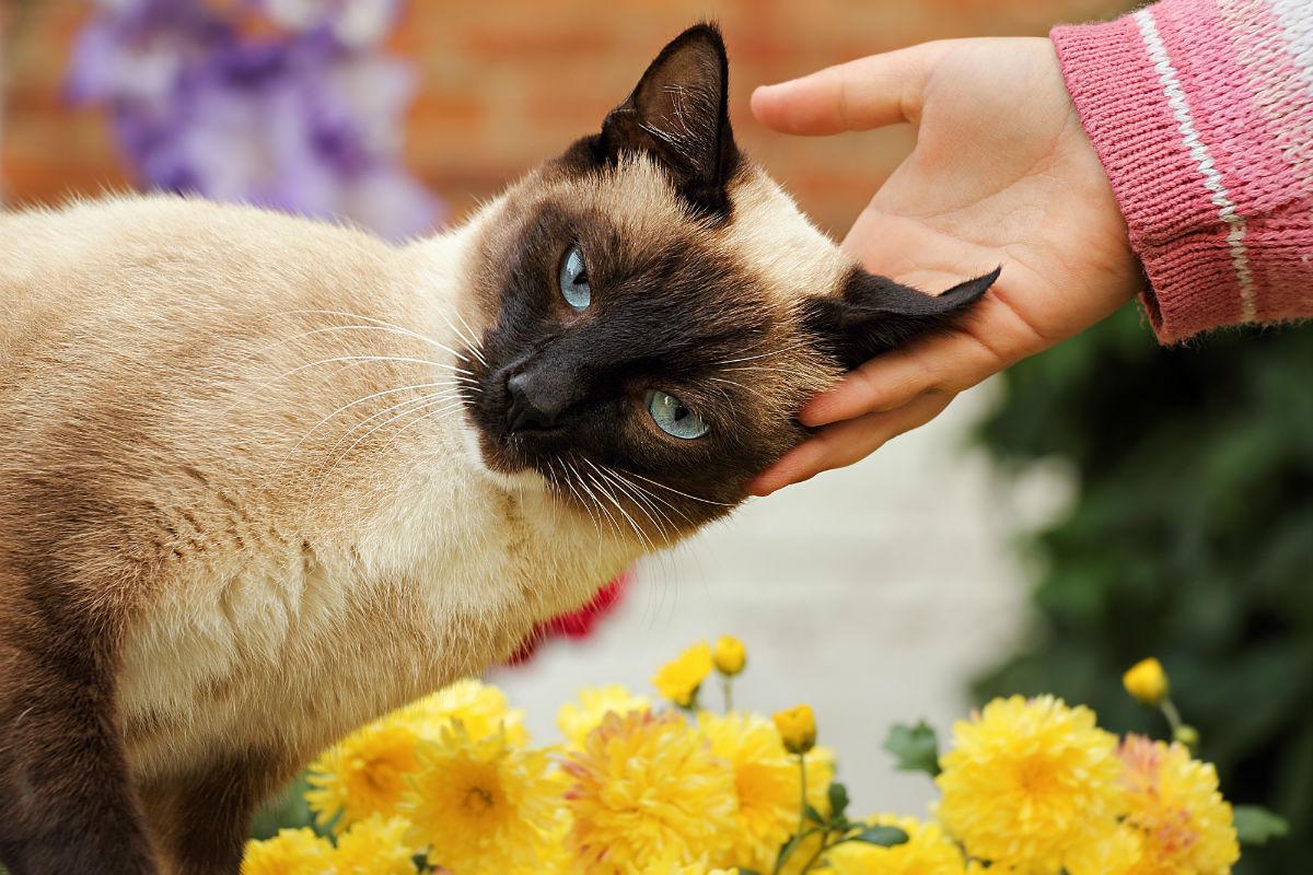 может ли кошка заразить человека гриппом