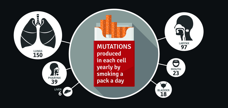 Одна раковая мутация на каждые 50 сигарет: курение серьёзно повреждает геном