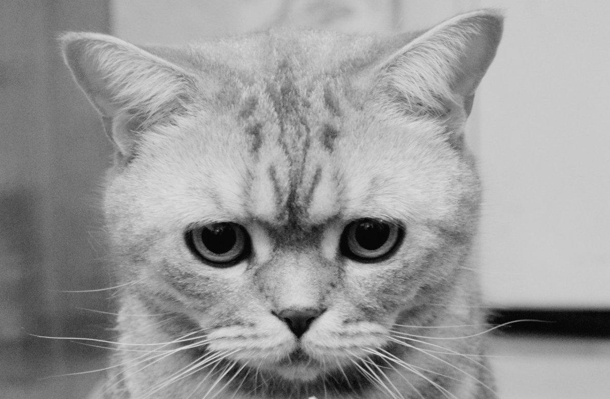 кошки помнят больше, чем принято считать