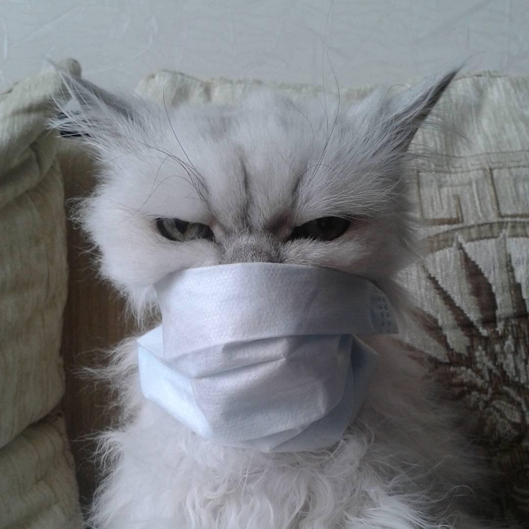 пользователи Инстаграм показали, как бороться с гриппом