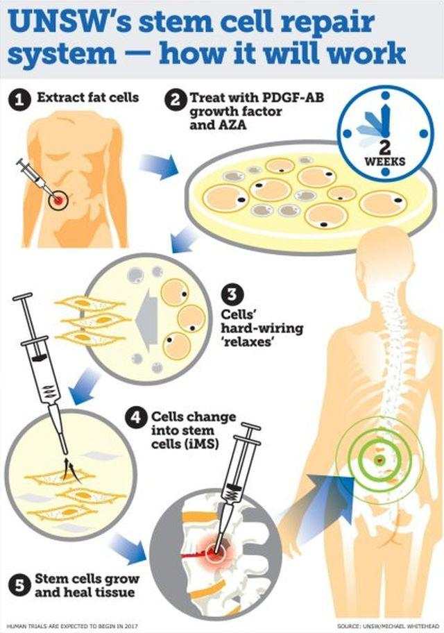 разработана система регенерации тканей человеческого тела