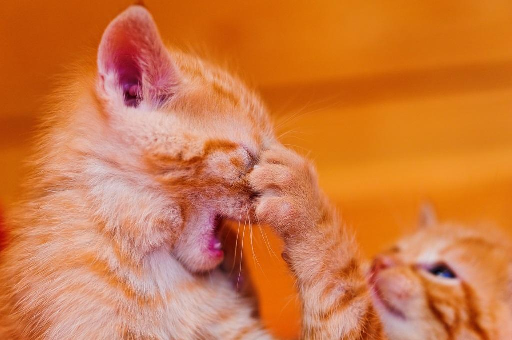 кошки меняют сексуальную жизнь хозяев