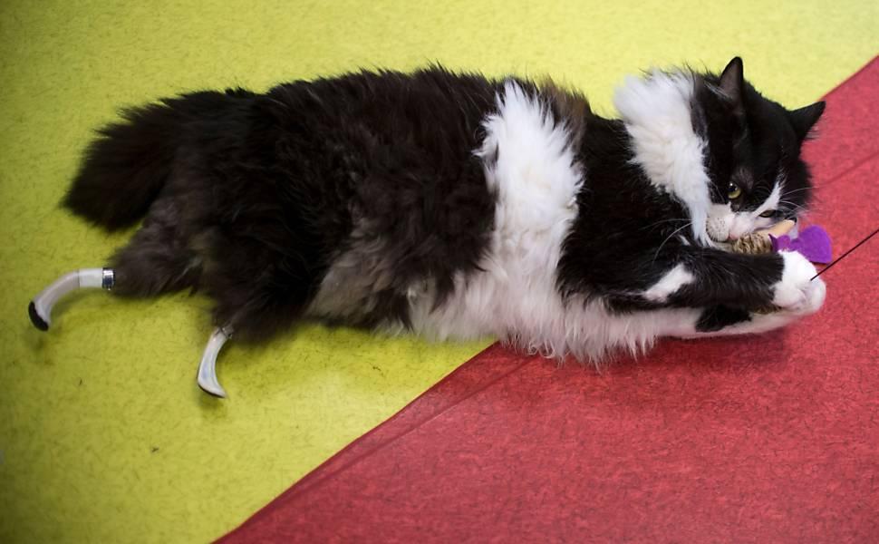 Два бездомных кота получили лапы-протезы