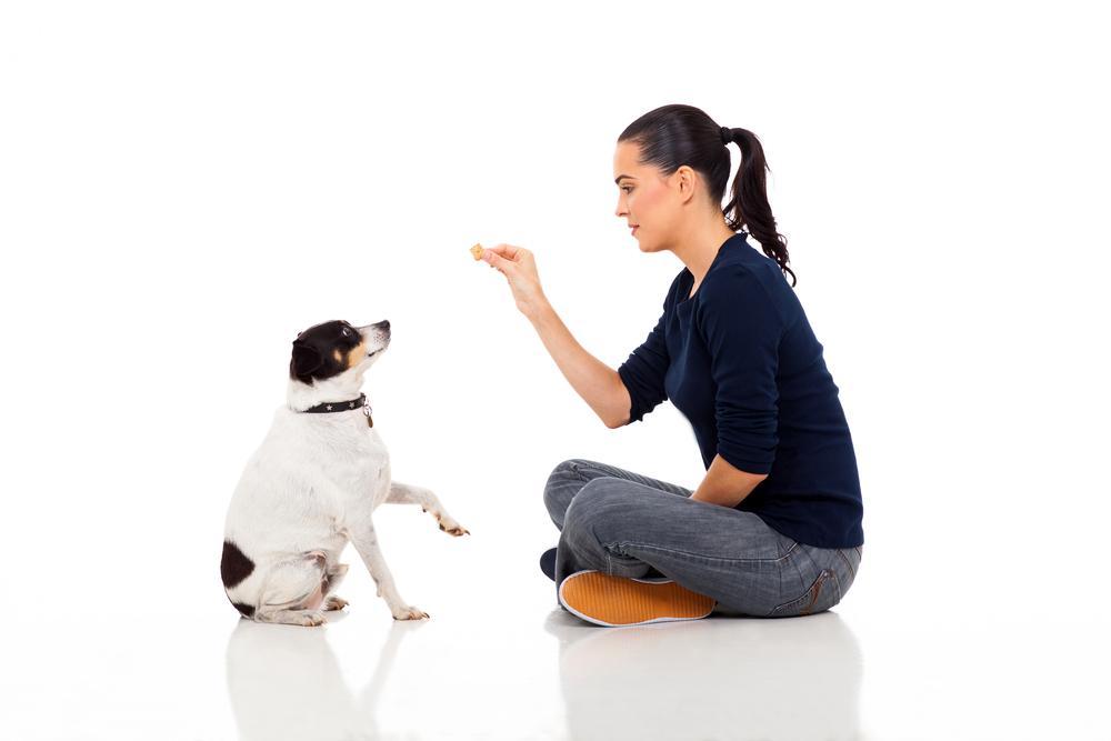 собаки помнят, что делают люди