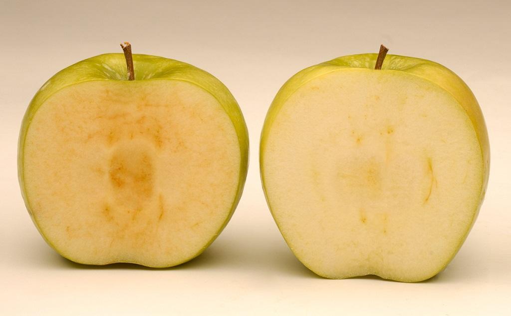 на рынок выходят яблоки которые не темнеют