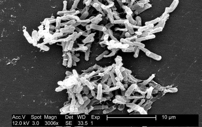 один из методов лечения рака сочли еще более усугубляющим заболевание