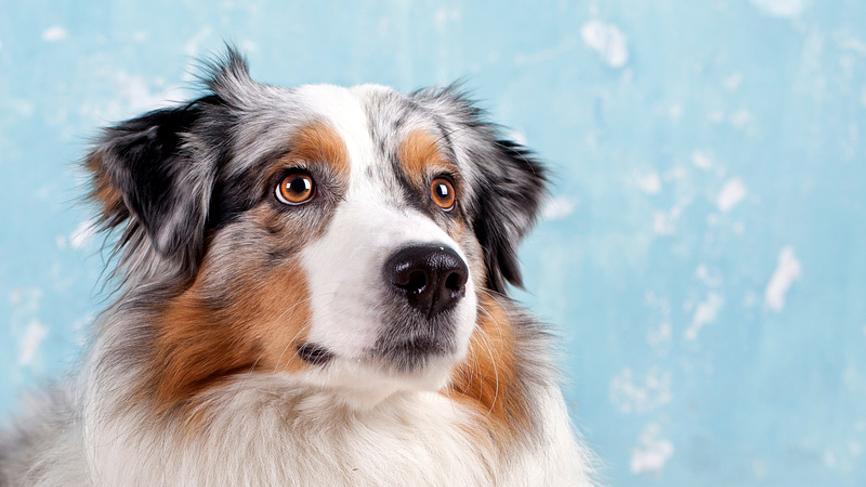 домашние животные полезны для личной жизни