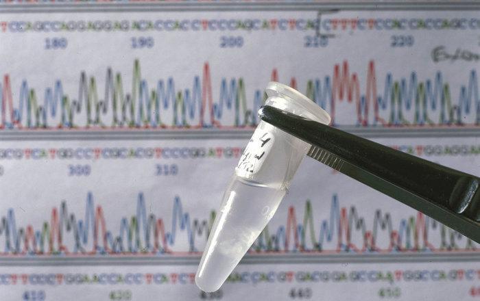 нейрофизиологи нашли главный ген аутизма