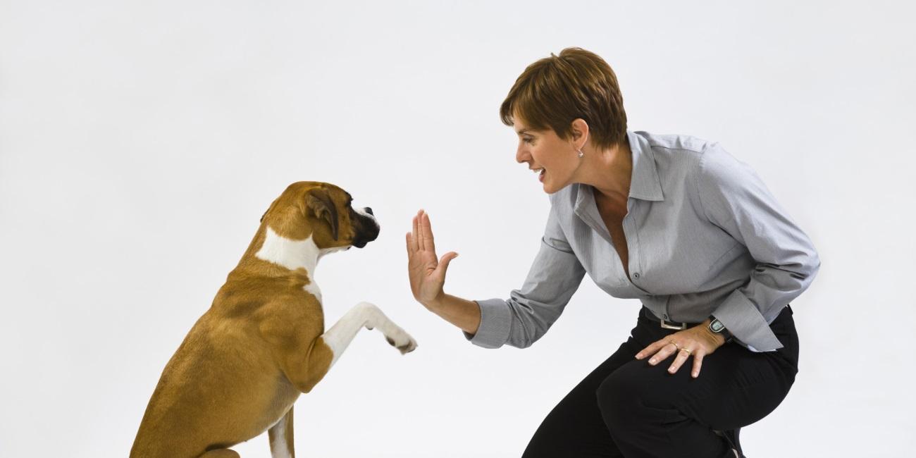 Дружбу между собакой и человеком объяснили влиянием генов и окситоцина