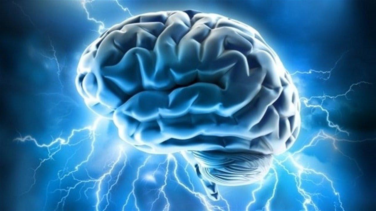 в Гарвардском университете выращен искусственный мозг