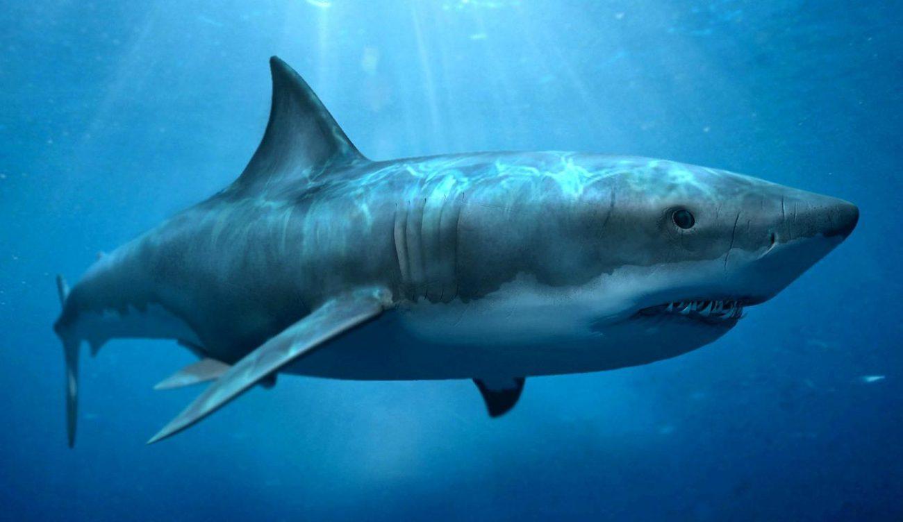 У акул и скатов нашли противораковые гены