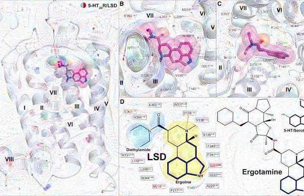 учёные впервые наблюдали ЛСД в действии