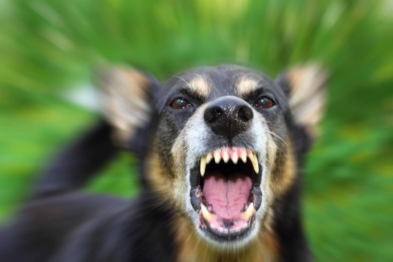 вся правда о бешенстве и бродячих собаках