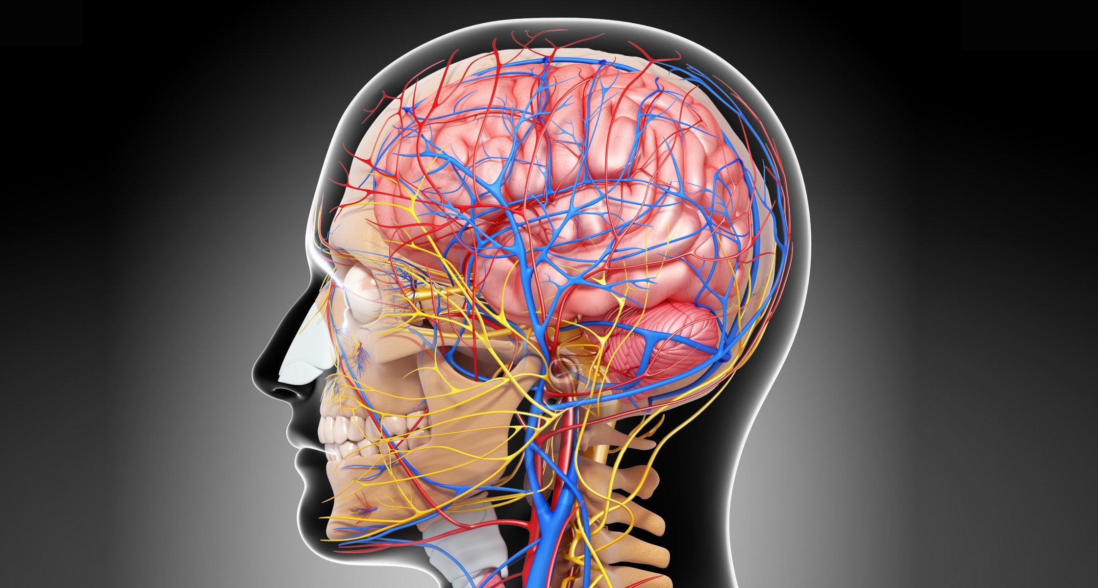 3D-обследование сосудов мозга поможет ранней диагностике