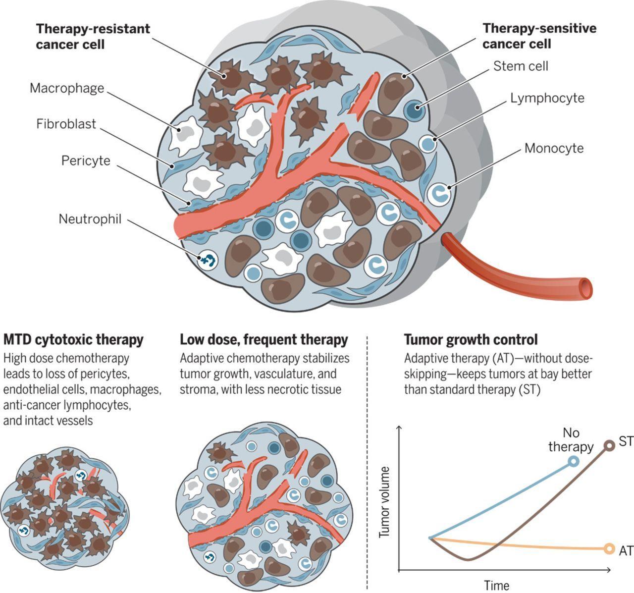 Экспериментальная методика позволила дольше держать рак под контролем