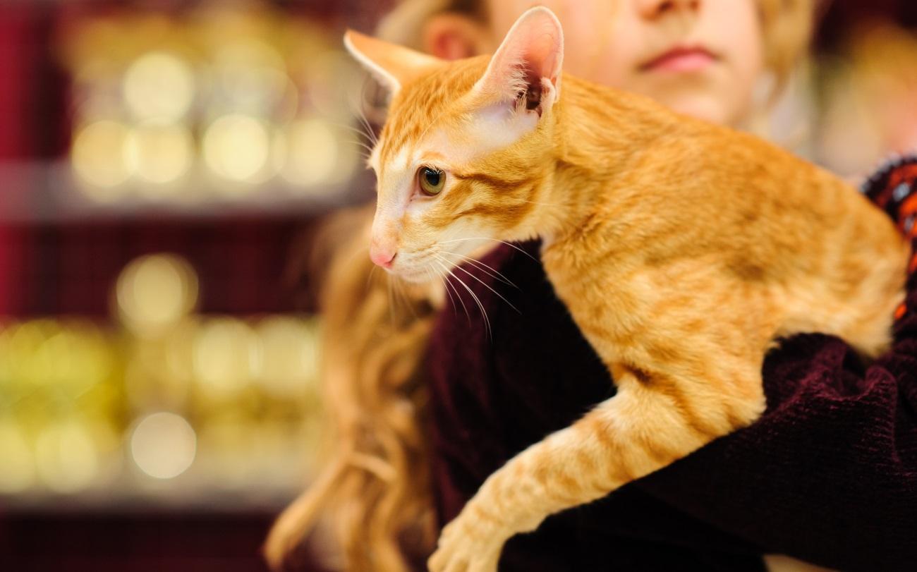 6 причин, почему домашние животные улучшают здоровье