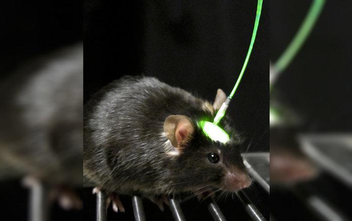 разбудите во мне зверя оптогенетика превратила мышей в хищников