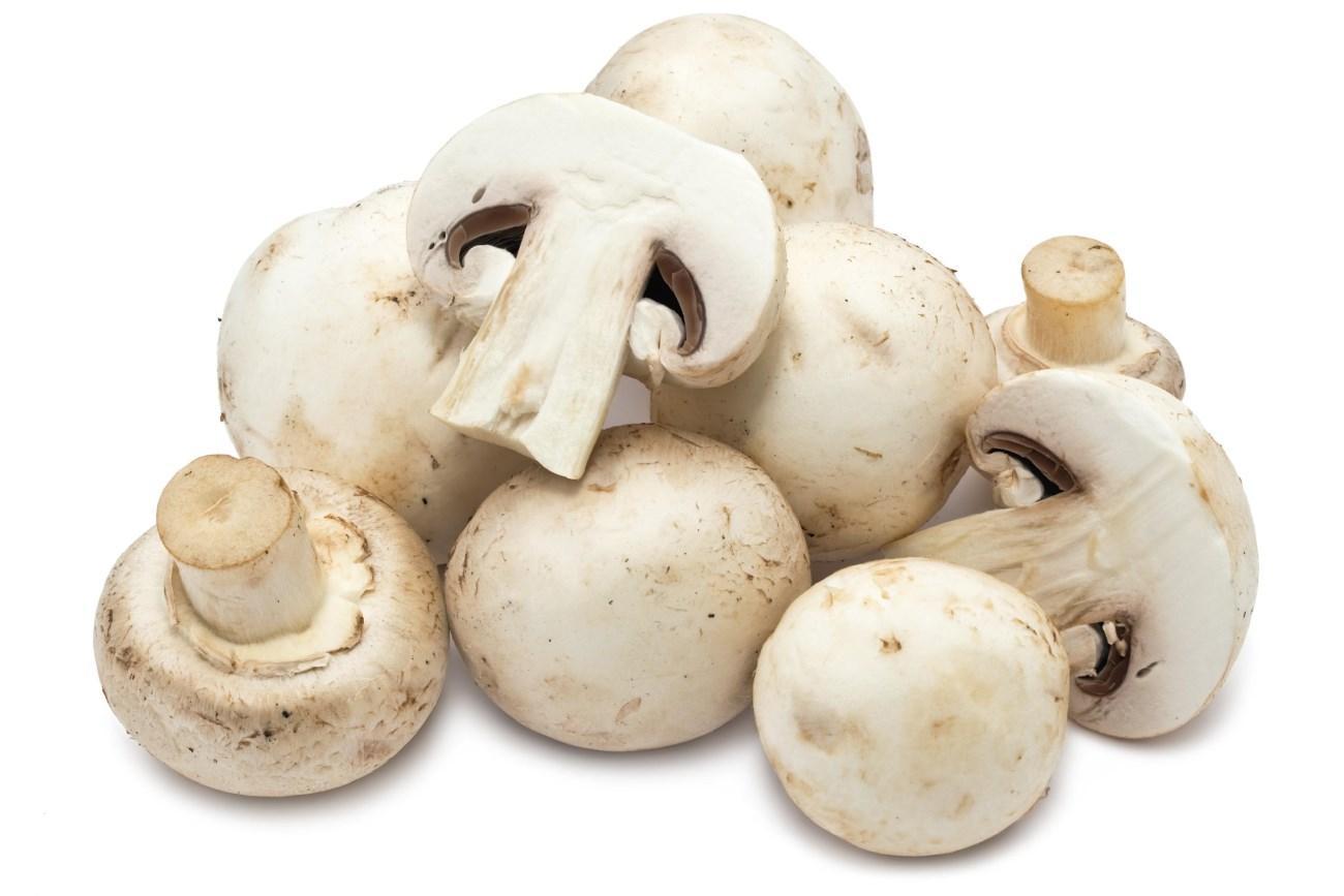 грибы могут стать суперфудом для мозга