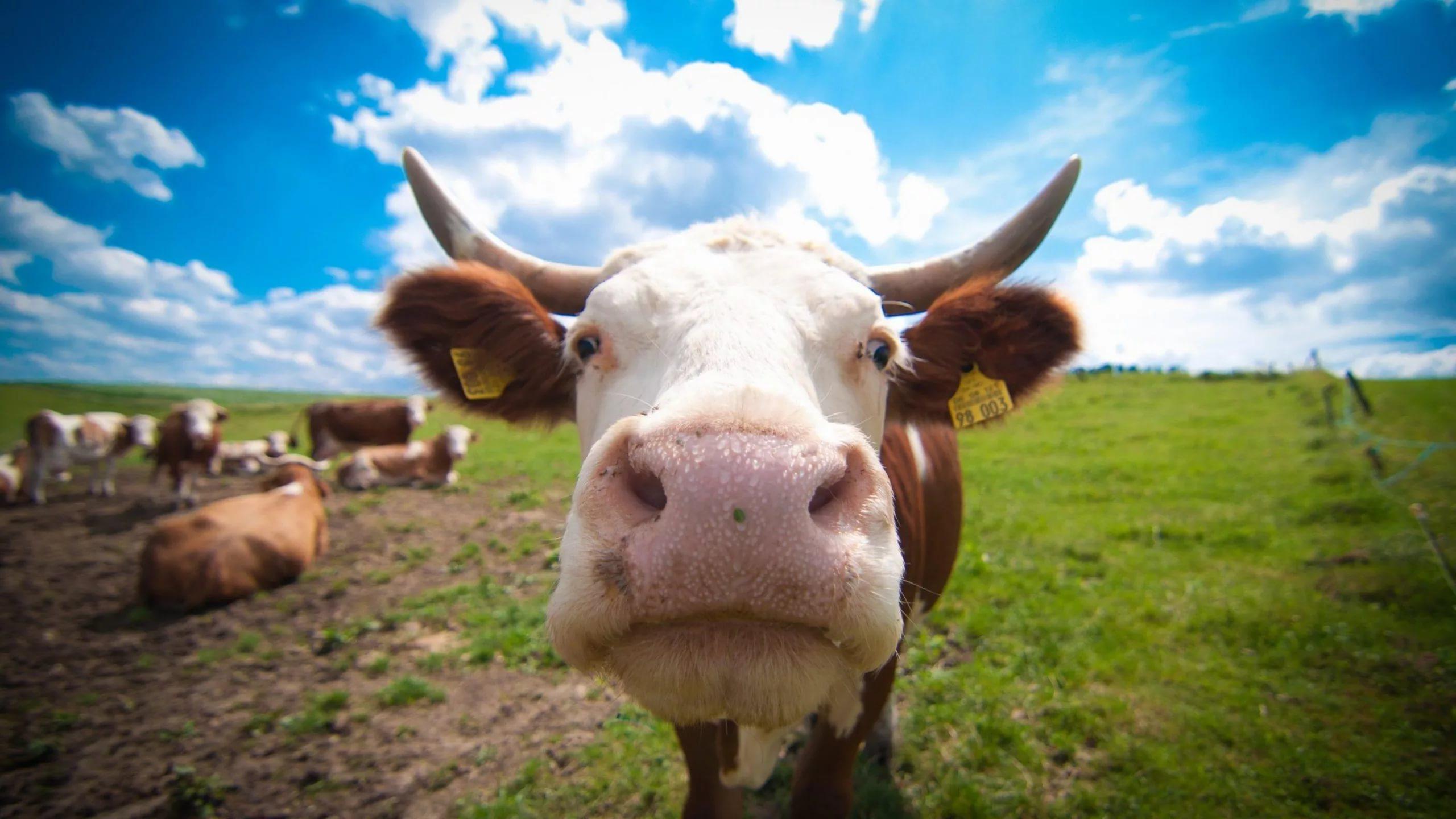 Гомеопатия оказалась бесполезной и для животных