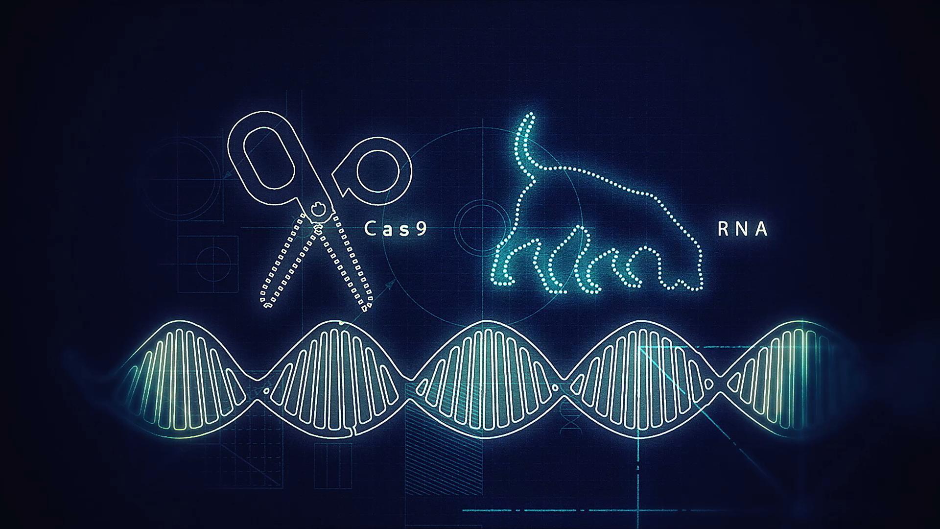 CRISPR: как редактирование генома поможет побороть бедность?