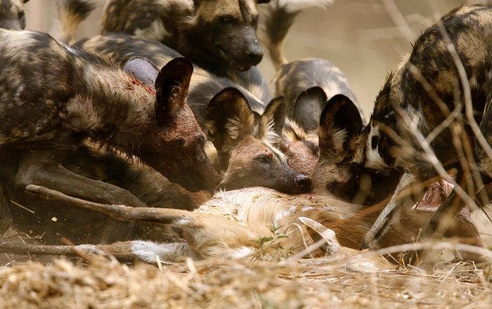 шум города мешает животным