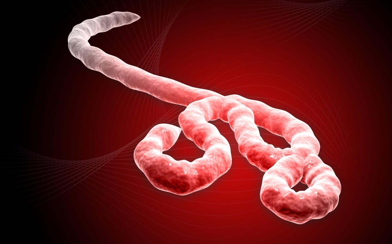 Мужчины, переболевшие Эболой, являются носителем вируса